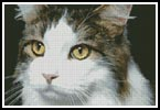 Cat Close Up 2 - Cross Stitch Chart
