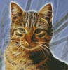 Cat Fractal - Cross Stitch Chart