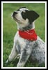 Cattle Dog - Cross Stitch Chart