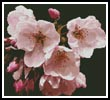 Cherry Blossom Flower - Cross Stitch Chart