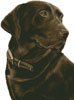 Chocolate Labrador (No Background) - Cross Stitch Chart