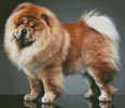 Chow Chow - Cross Stitch Chart