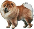 Chow Chow (No Background) - Cross Stitch Chart