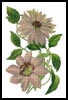 Clematis - Cross Stitch Chart