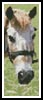 Cleo the Pony Bookmark - Cross Stitch Chart