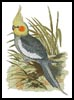 Cockatiel - Cross Stitch Chart