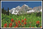 Colorado - Cross Stitch Chart