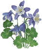 Columbine - Cross Stitch Chart
