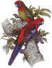 Crimson Rosellas - Cross Stitch Chart