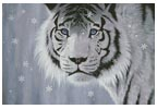 Crystal Eyes - Cross Stitch Chart