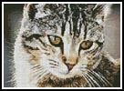 Cute Cat - Cross Stitch Chart
