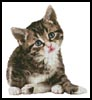 Cute Little Kitten - Cross Stitch Chart