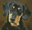 Dachshund Portrait - Cross Stitch Chart