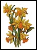 Daffodils - Cross Stitch Chart