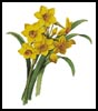 Daffodils 2 - Cross Stitch Chart