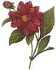 Dahlia Double - Cross Stitch Chart