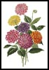 Dahlias - Cross Stitch Chart