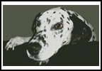 Dalmatian - Cross Stitch Chart
