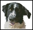 Dog Close Up - Cross Stitch Chart