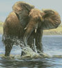 Elephant Painting (Crop) - Cross Stitch Chart