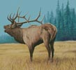 Elk Bugler 1 - Cross Stitch Chart