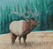 Elk Bugler 2 - Cross Stitch Chart