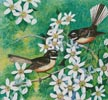 Fantails and Clematis - Cross Stitch Chart