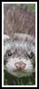 Ferret Bookmark - Cross Stitch Chart
