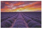 Field of Lavender at Sunrise - Cross Stitch Chart