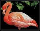 Flamingo - Cross Stitch Chart