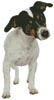 Fox Terrier Puppy - Cross Stitch Chart