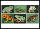 Frog Sampler - Cross Stitch Chart