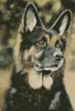 German Shepherd Painting - Cross Stitch Chart