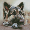 German Shepherd Painting 2 - Cross Stitch Chart