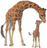 Giraffe and Calf - Cross Stitch Chart