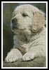 Golden Retriever Puppy - Cross Stitch Chart