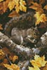 Golden Season - Cross Stitch Chart