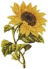 Golden Sunflower - Cross Stitch Chart
