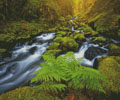Gorton Creek Fern - Cross Stitch Chart