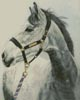 Grey Horse - Cross Stitch Chart