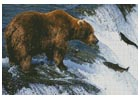 Grizzly Bear Salmon Fishing - Cross Stitch Chart