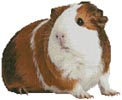 Guinea Pig - Cross Stitch Chart