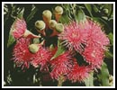 Gum Flowers - Cross Stitch Chart