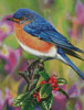 Hollyberry Bluebird - Cross Stitch Chart
