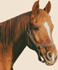 Horse Close Up - (Facebook Group) Cross Stitch Chart