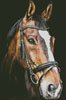 Horse Close Up 2 - Cross Stitch Chart
