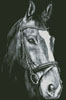 Horse Close Up 2 (Black and White) - Cross Stitch Chart