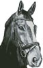 Horse Close Up 2 (Black and White) No Back - Cross Stitch Chart
