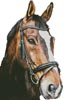 Horse Close Up 2 (No Back) - Cross Stitch Chart