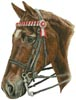 Horse Profile - Cross Stitch Chart